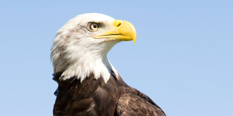 A bird's eye view: How does human eyesight compare to an eagle's?