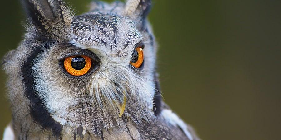 LMDBlog_Scary_Animal_Eyes_LO